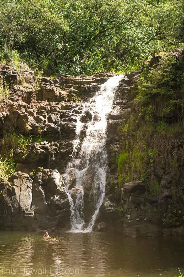 Can you swim at Waimea falls?