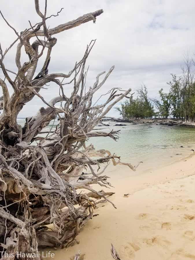 Advantages to visiting Makalawena beach