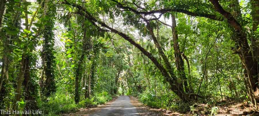 Road loop drive on the Pahoa/Kapoho to Government Beach road