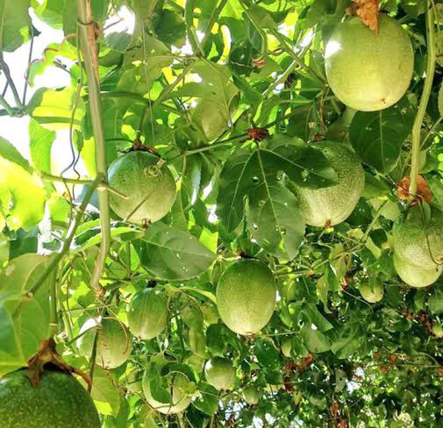 What is Lilikoi or Passionfruit?