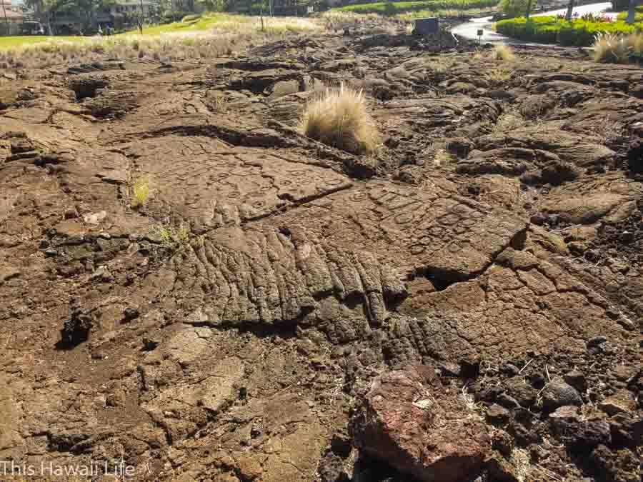 Visit the Waikoloa Petroglyphs