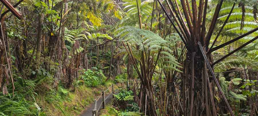 Forest setting to Nahuku lava tube