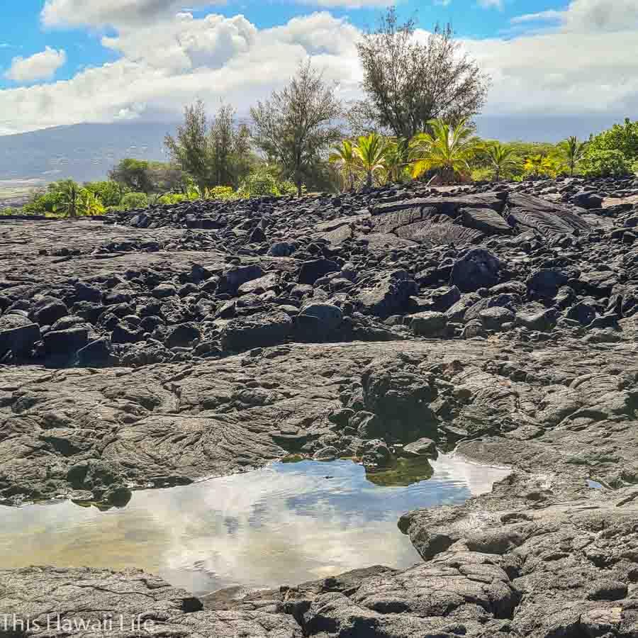 Experience an eco tourism Hawaii shoreline tour on the Big Island