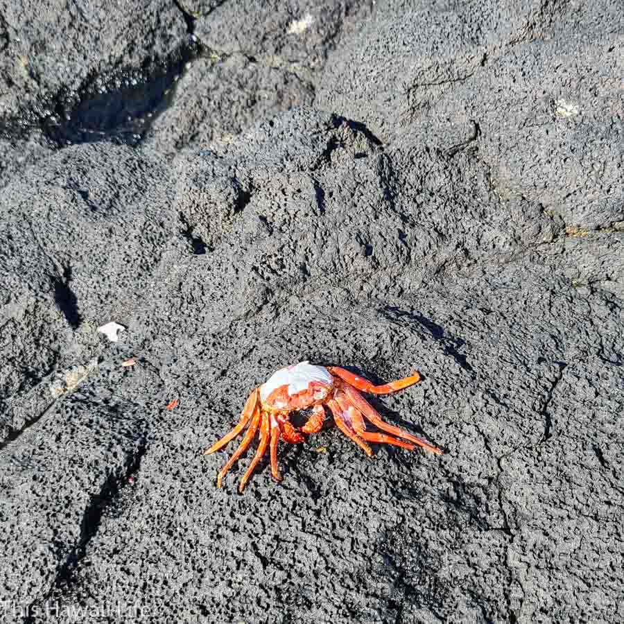 Conclusion - Have you experienced an eco tourism Hawaii shoreline tour?