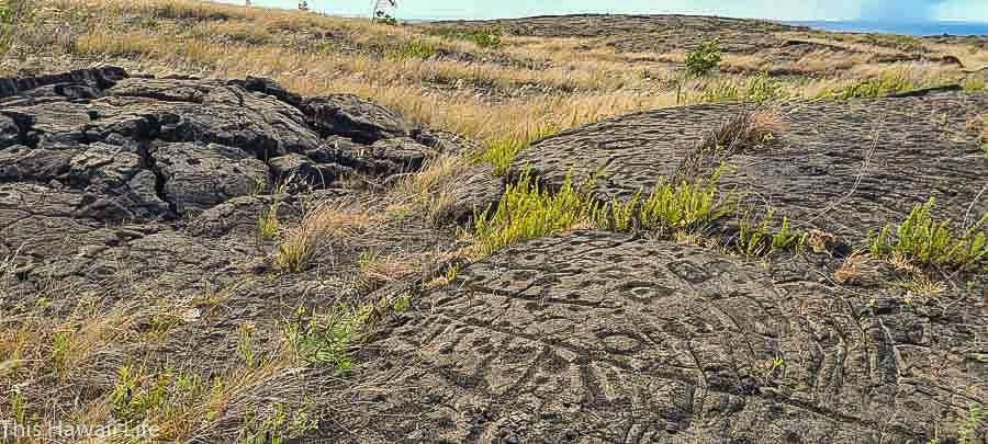 Visit to Pu'u Loa Petroglyphs