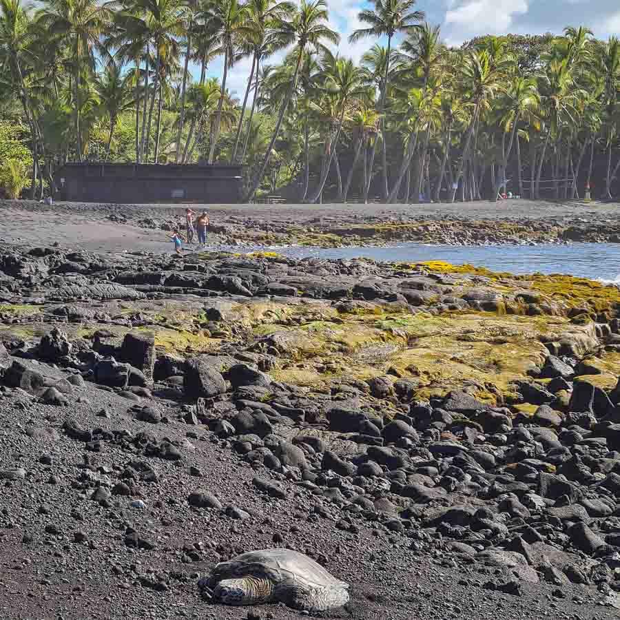 How to get to Punalu'u beach