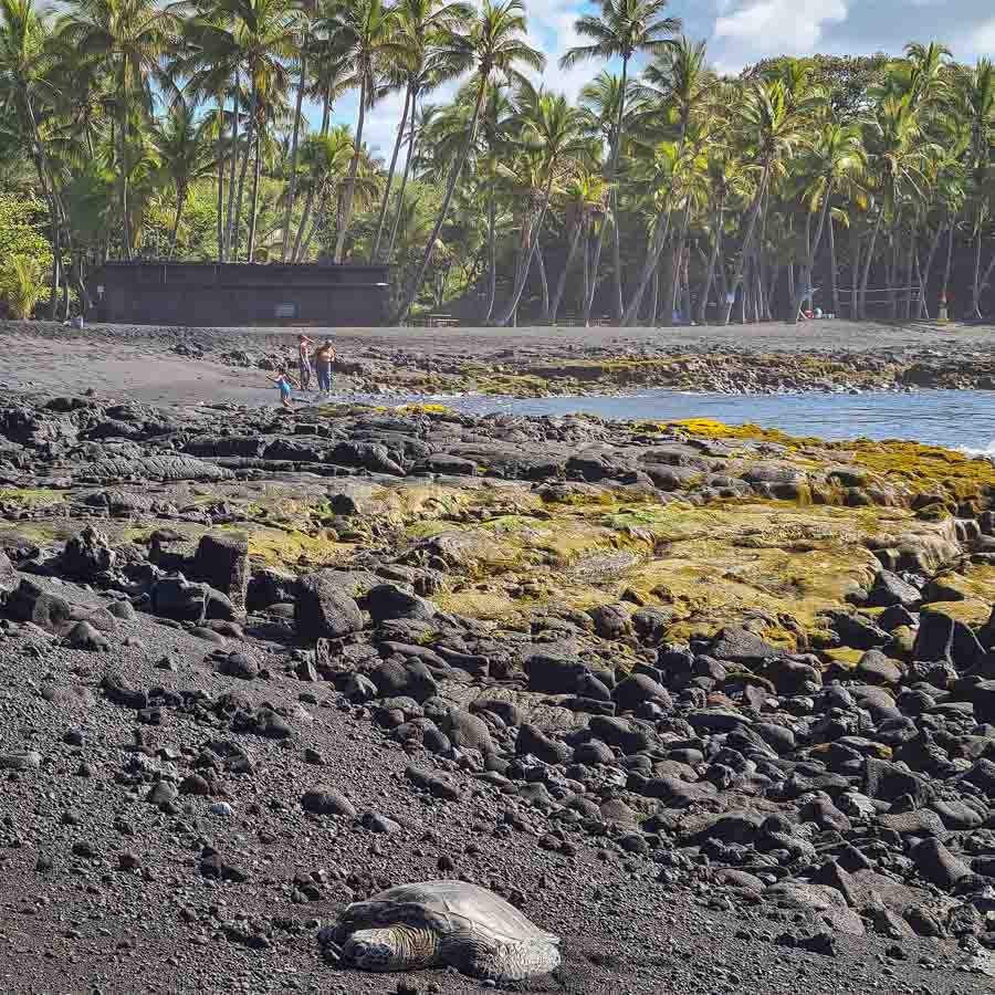 Sea turtle zone are typically cordoned off at Punalu'u