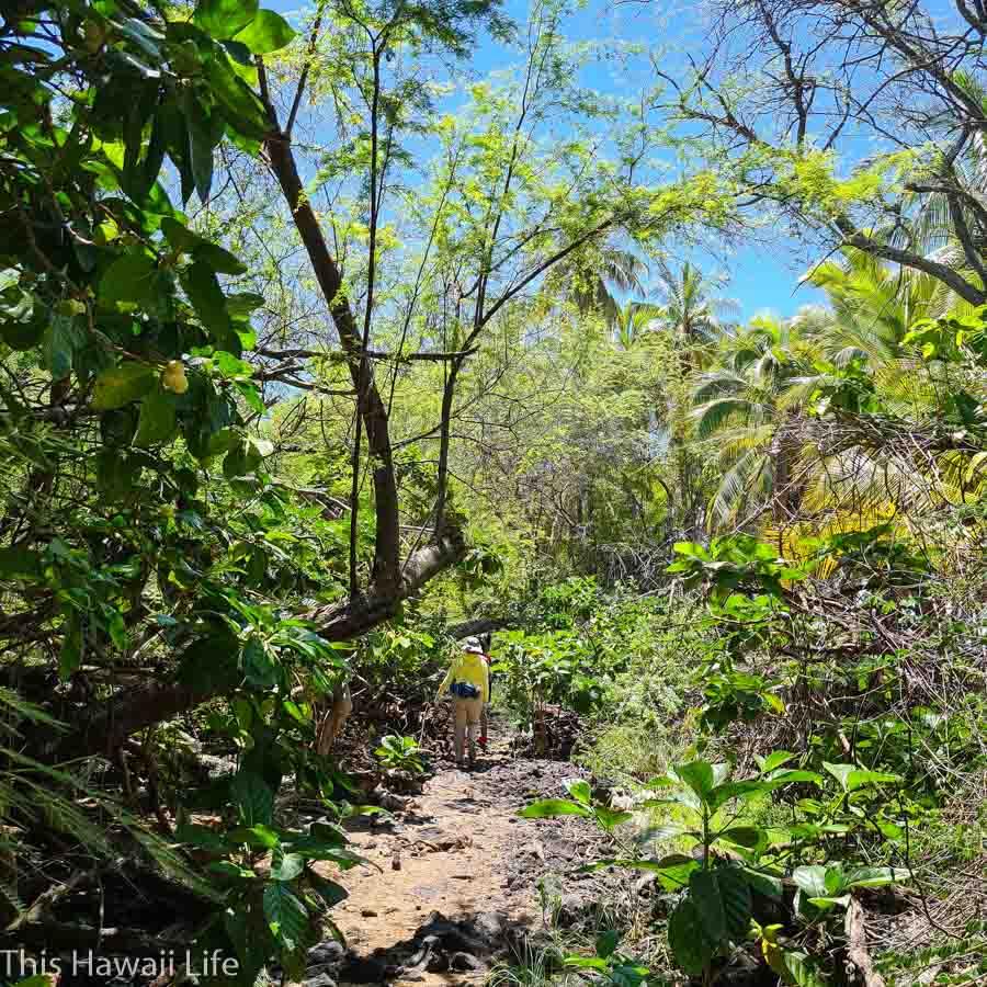 Dense jungle area along the coastline trail