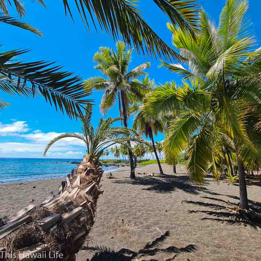Beautiful coconut trees and palms on the beach perimeter