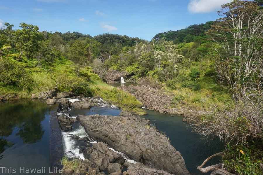 Hike to Narnia above Hilo