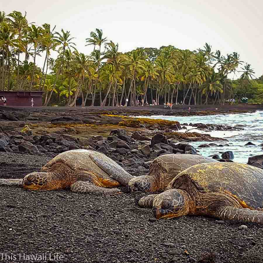 Best hikes to explore and enjoy the outdoors around the Big Island