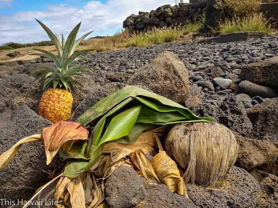 Food and leaf offerings at the stone heiau called Kalalea